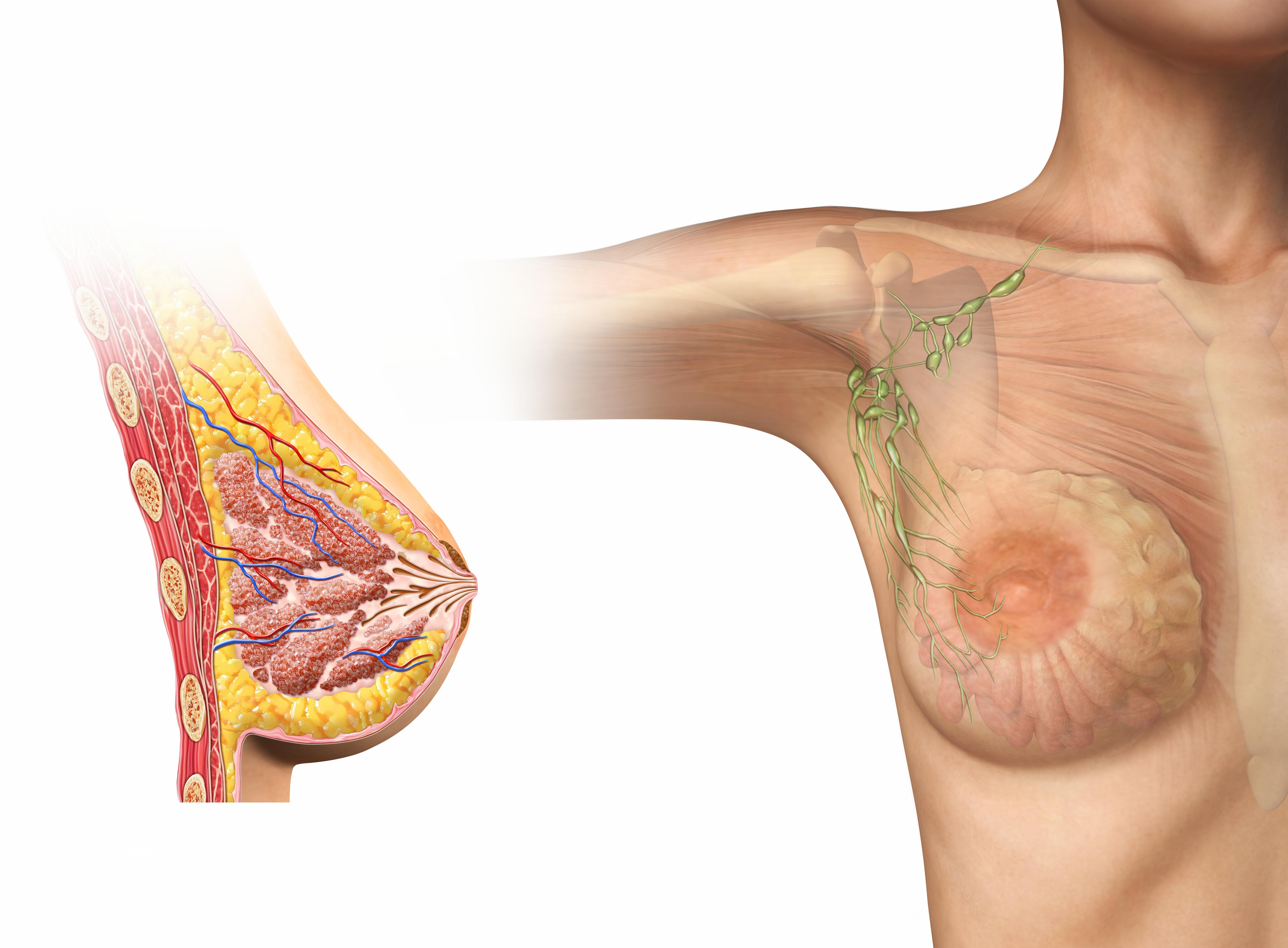 Groß Venöse Anatomie Der Brust Galerie - Anatomie Ideen - finotti.info