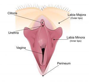 Intimchirurgie Frau Köln Vagina-OP